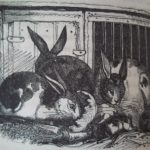 Domestic rabbits in 'A Practical Treatise...' by Moubray, 1834
