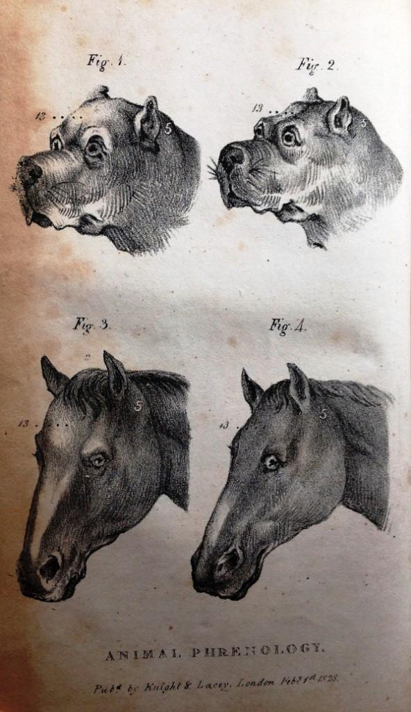 Animal phrenology