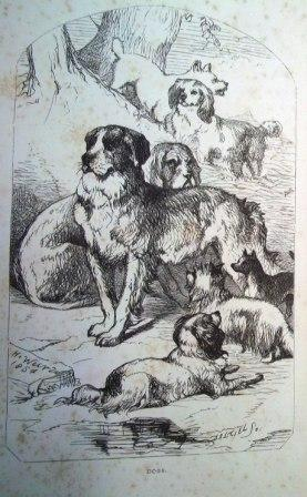 Frontispiece from Mayhew's Dogs: their management