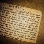 Bracy Clark hoof - the wall